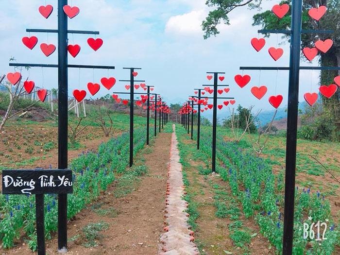 Con đường tình yêu ở khu Vườn Mộng mơ, Mộc Châu