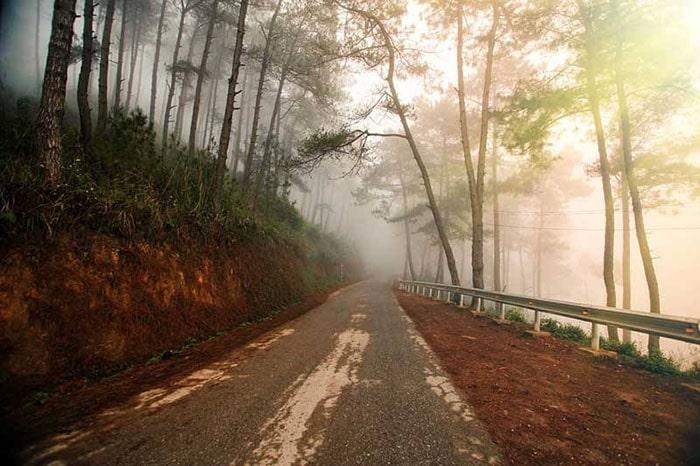 Đoạn đường qua rừng thông Yên Minh