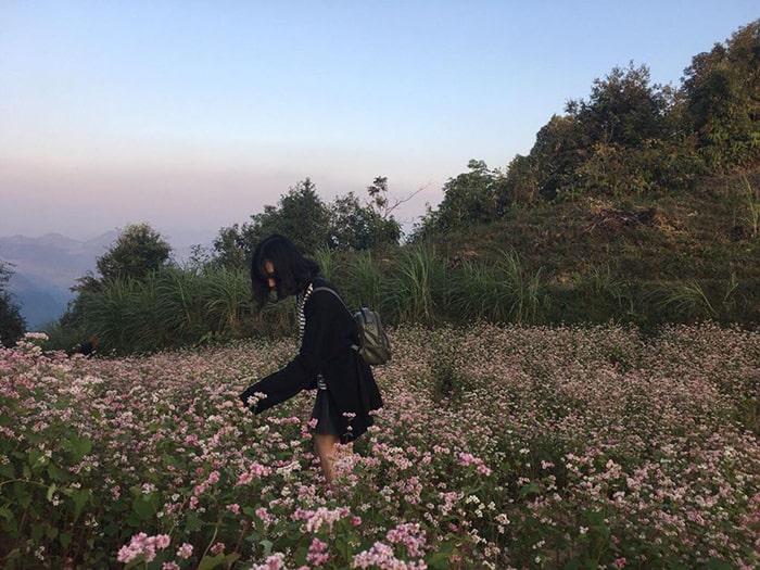 Vườn hoa tam giác mạch Hà Giang