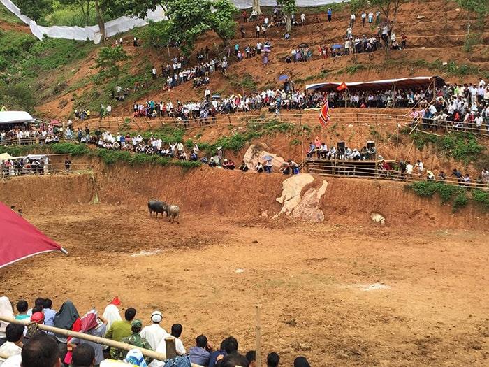 Lễ hội chọi trâu MỘc Châu được tổ chức thường niên