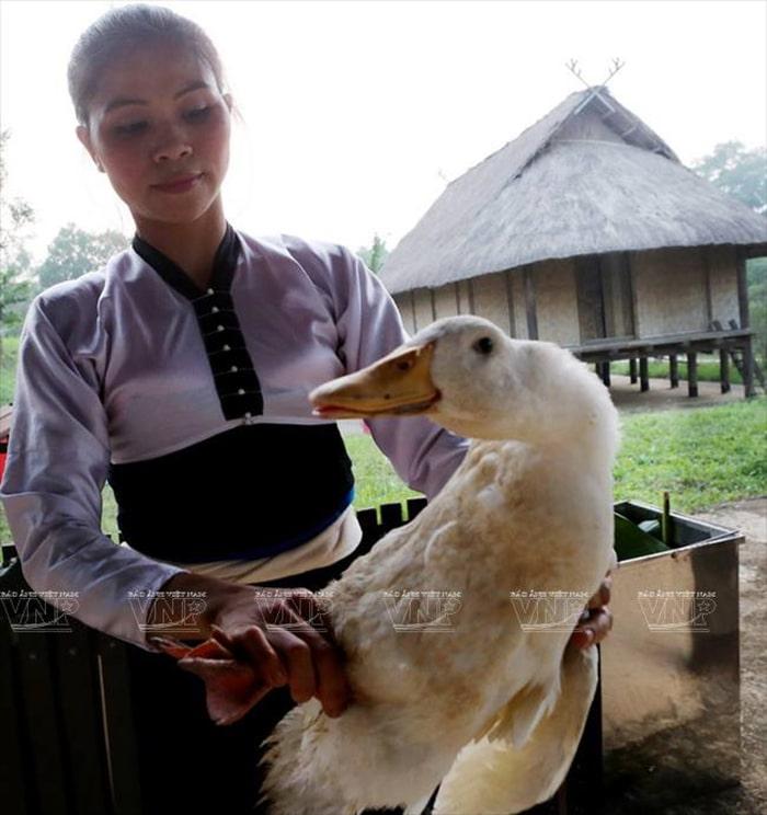 Thịt vịt là món không thể thiếu trong ngày Tết Xíp Xí của người Thái