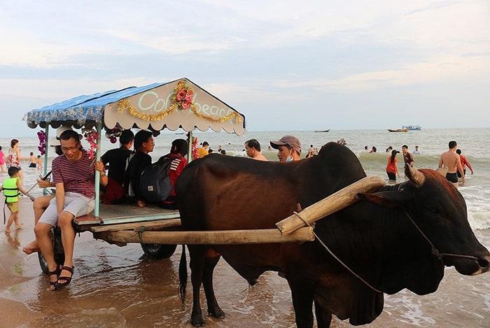 Đi xe bò trên bãi biển Cam Bình