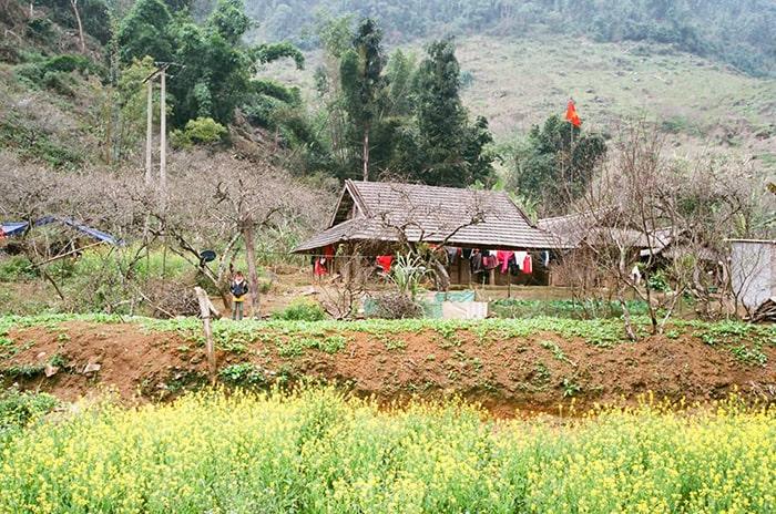 Cánh đồng hoa cải vàng ở bản Ba Phách