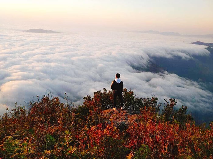 Biển mây trên đỉnh Pha Luông