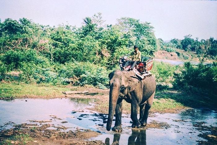 Cưỡi voi tham quan vườn quốc gia Yok Đôn