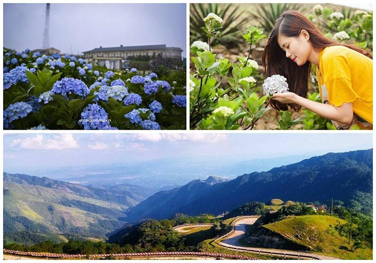 Nếu bạn nào thích ngắm loài hoa này thì hãy du lịch Mẫu Sơn vào tháng 5, 6 để checkin ngay nhé.