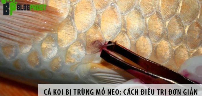 Cá Koi bị trùng mỏ neo: Cách điều trị đơn giản