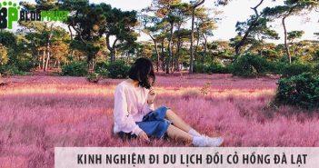 Review kinh nghiệm đi du lịch đồi cỏ hồng Đà Lạt