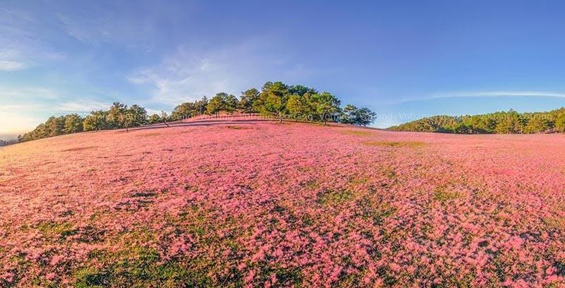 Nên đi đồi cỏ Đà Lạt vào cuối tháng 12
